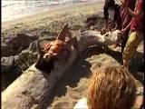 Eva Longoria a Maxim fotózásán 2